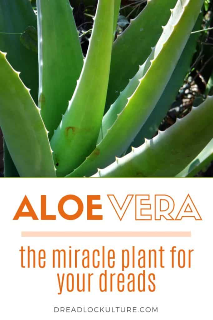 Aloe Vera for Dreadlocks